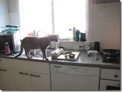 cat_on_kitchen_counter
