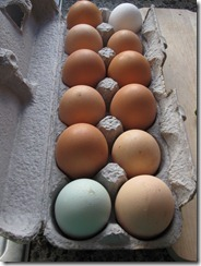 fresh_eggs_marin_farm