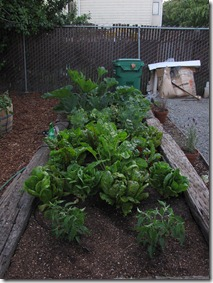 our_berkeley_garden_week_six