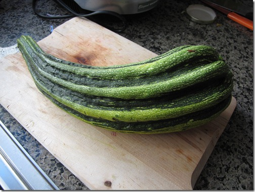 Massive_zucchini