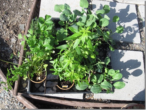 winter_garden_seedlings